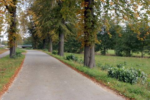 Mittelstraße mit Baumlücken.