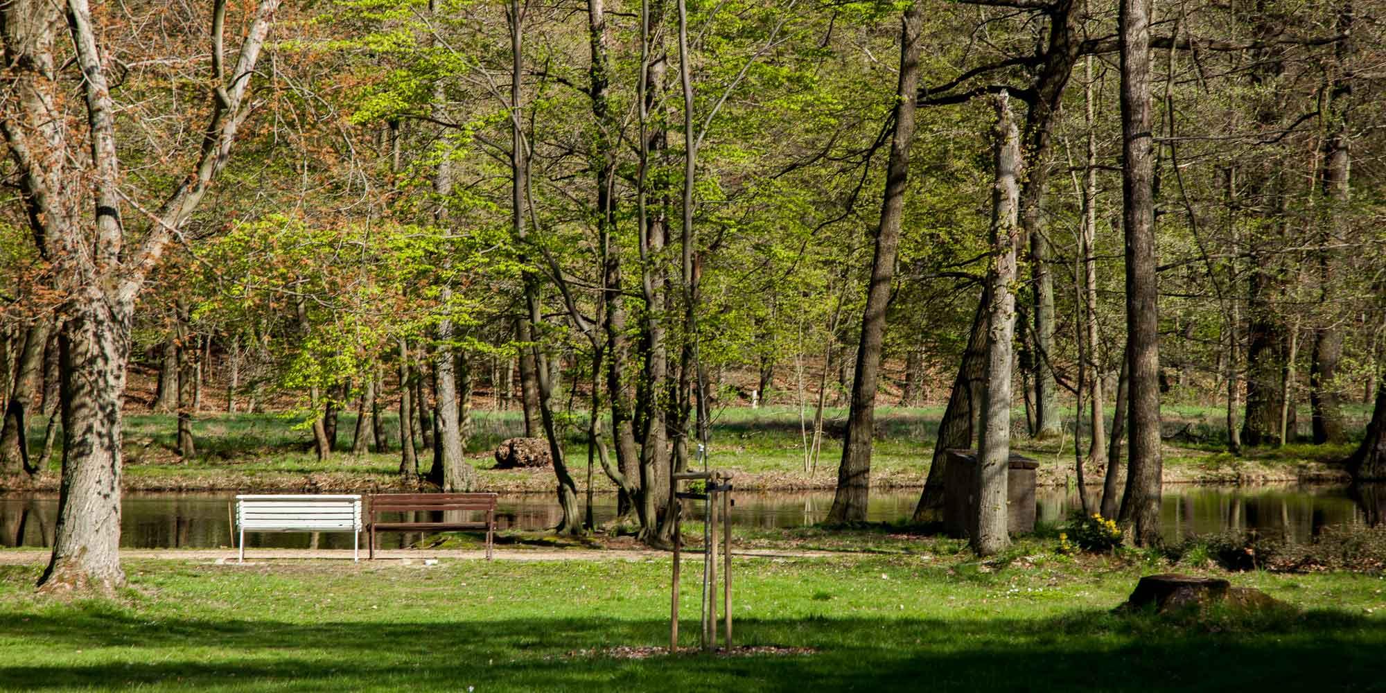Im Schlosspark Deutsch-Paulsdorf, Teil des Friedwaldes