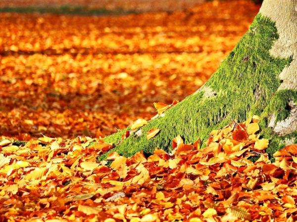 Herbstputz in Holtendorf