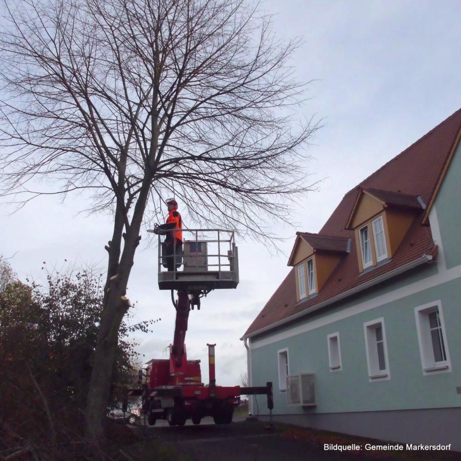 Baumfällungen in Gebäudenähe bringen oft hohen Aufwand mit sich