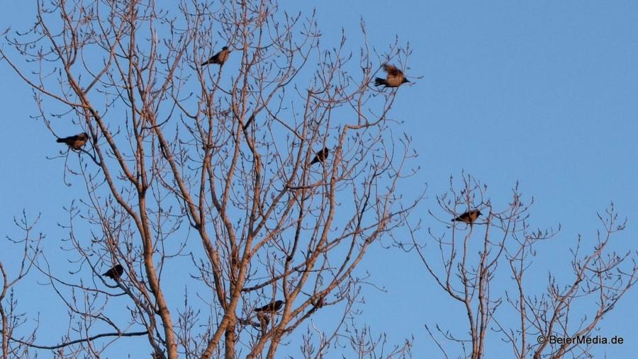 Nicht nur die Menschen haben das nass-kalte Wetter satt, auch die Vögel warten auf den Frühling und genießen die ersten wärmenden Sonnenstrahlen