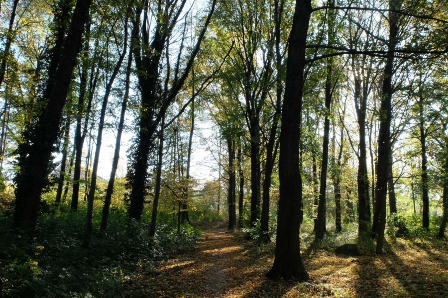 Im Schlosspark von Gersdorf