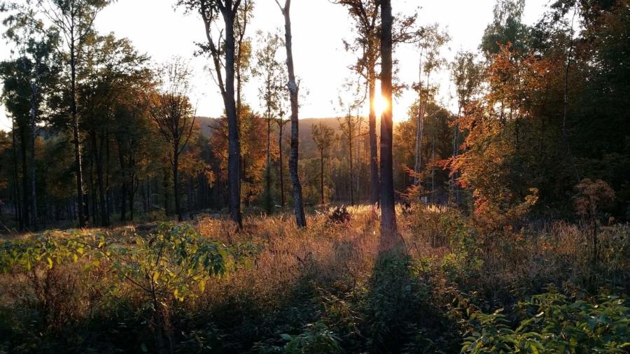 Noch einmal spielt der Herbst seine Farben in den Wäldern rund um Markersdorf – hier in den nahen Königshainer Bergen – aus. Hinaus in die Natur – das ist in Corona-Zeiten nicht die schlechteste Idee