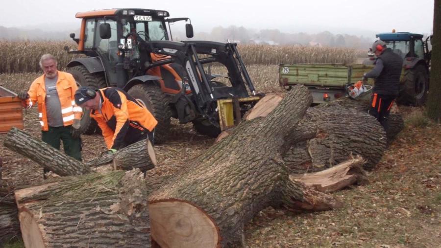 Wie immer in dieser Jahreszeit mussten Baumfällarbeiten erledigt werden; hier an der Eichenallee in Deutsch-Paulsdorf, wo zwei abgestorbene Eichen, die eine Gefahr durch herunterbrechende Äste darstellten, entfernt wurden