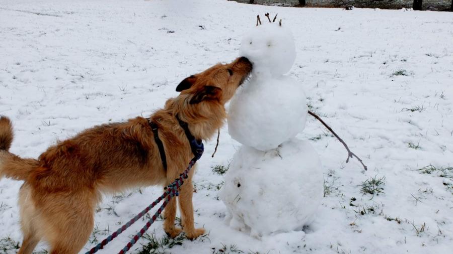Ein Küsschen in Ehren kann kein Schneemann verwehren... Allerdings hat Redaktionshund Rudi Rabauke gar nicht erst gefragt.