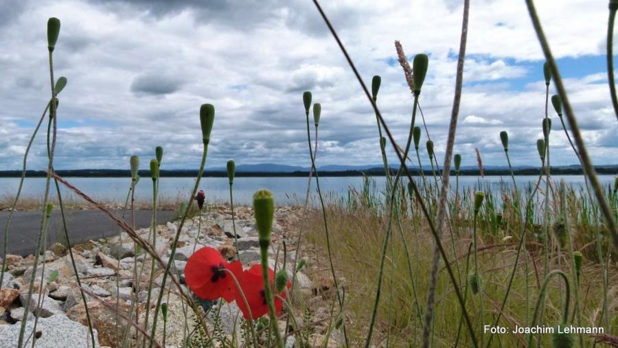 Längst hat sich der Berzdorfer See als Naherholungsgebiet etabliert. Abseits der Strände lädt er zum Entdecken der Natur ein.