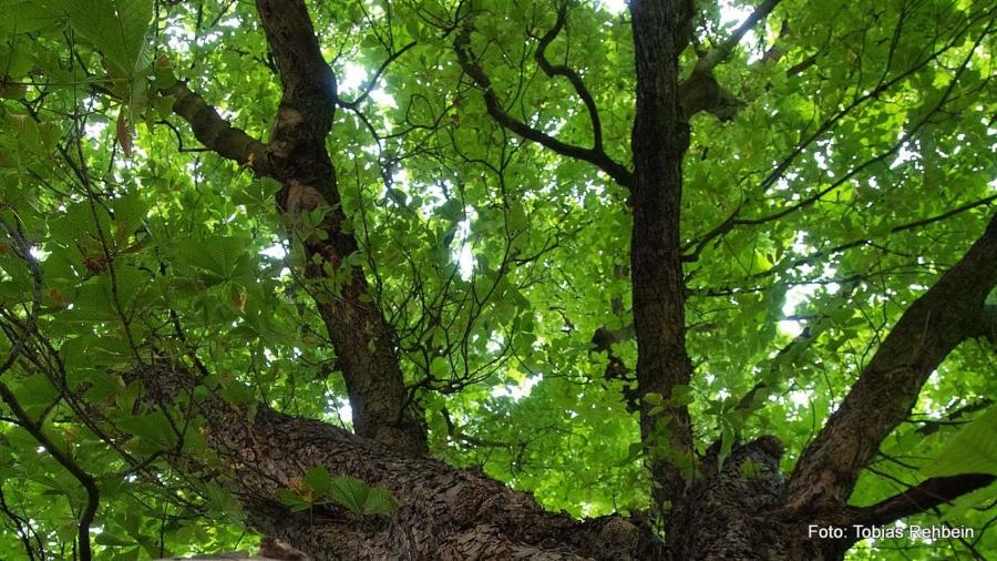 Irgendwann einmal werden die heutigen Grundschüler unter den Bäumen stehen und sich darn erinnern, dass sie es waren, die sie gepflanzt haben