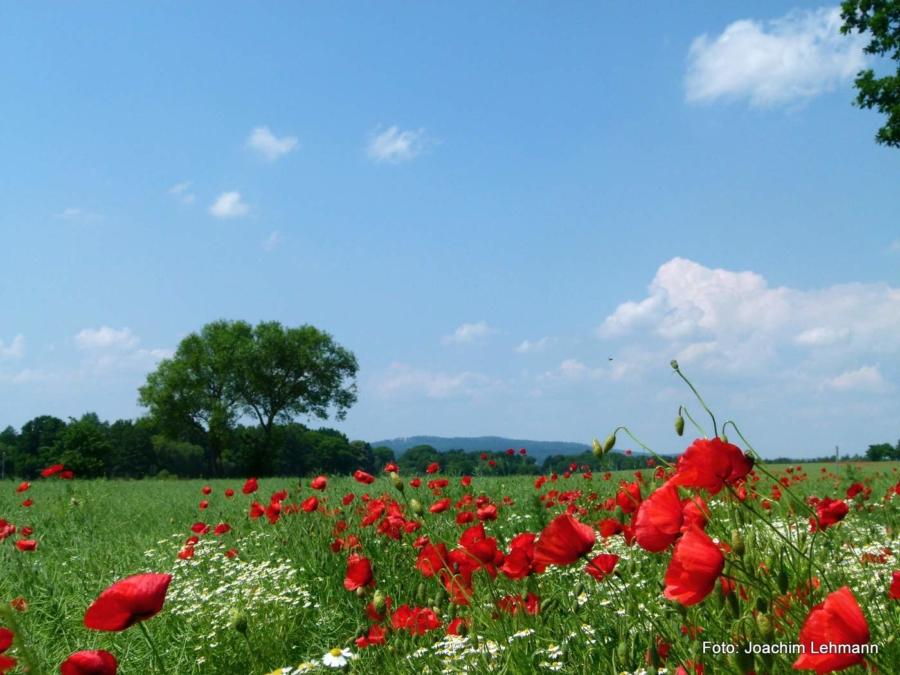 In Markersdorf bei Görlitz am Nachmittag