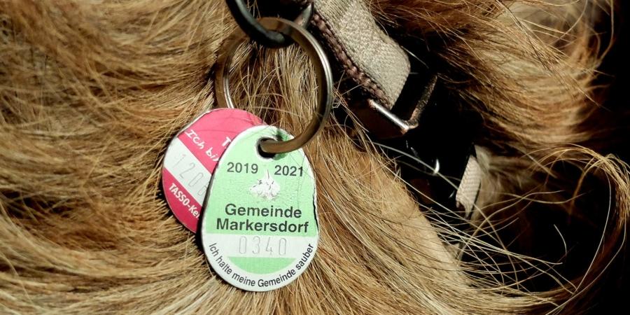 Zum Jahresende verliert die grüne Hundesteuermarke ihre Gültigkeit. Umgetauscht werden muss bis zum 17. Dezember 2021