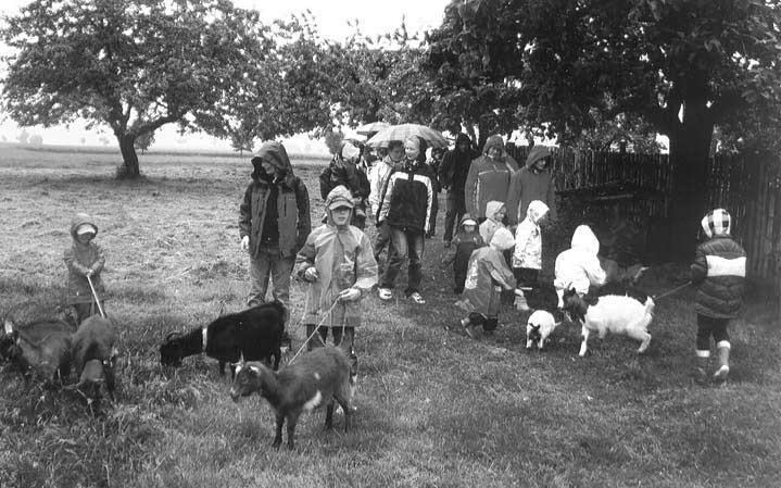 Ziegen, Esel und Meerschweinchen - für Kinder ein Stück selbstverständliches Landleben.