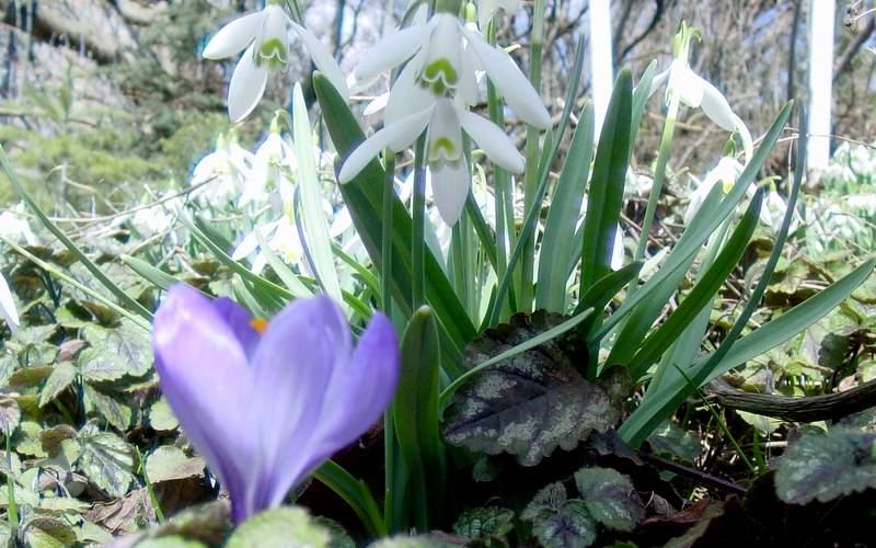 Zu Ostern 2011 ist der Frühling mit Kraft übers Land gekommen.