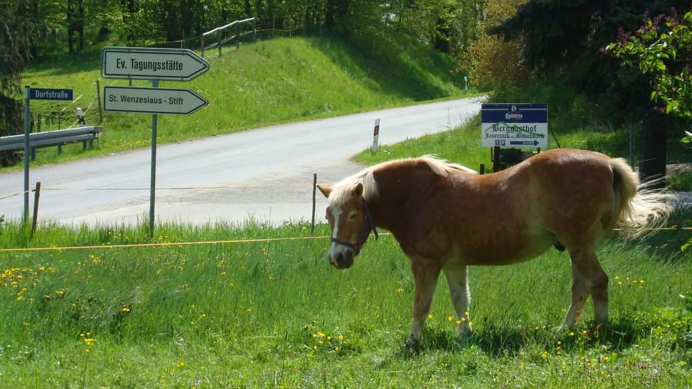 Das gepflegte Dorf bietet ländliche Idylle am Berzdorfer See. Fotos: BeierMedia.de