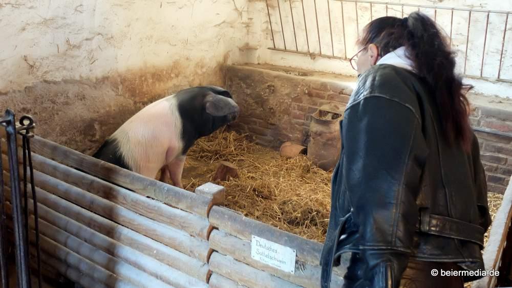 Für das Museumsschwein ist das Schlachtfest die aufregendste Veranstaltung des ganzen Jahres. Doch es weiß aus Erfahrung: Es gibt ein Leben nach dem Schlachtfest.