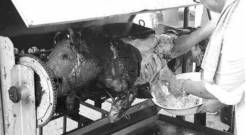 Das gegrillte Schwein am ersten Tag war schon nach knapp zwei Stunden verspeist