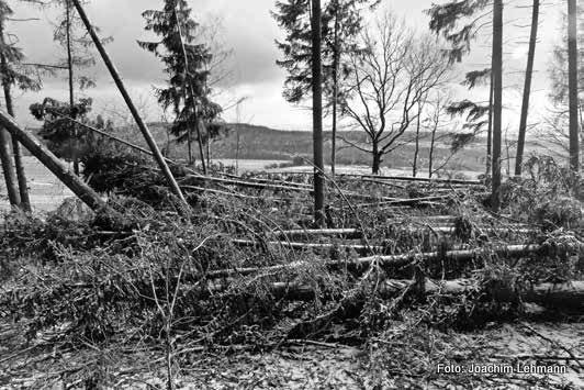 Waldschäden auf dem Jauernicker Schwarzberg, Foto: Joachim Lehmann